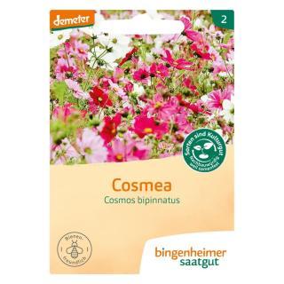 """.Cosmea """"Cosmos bipinnatus"""
