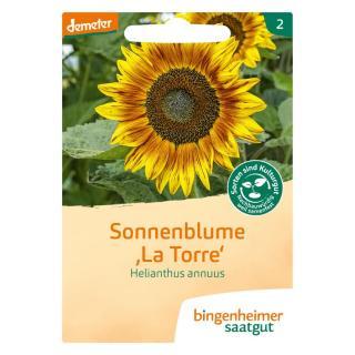 """.Sonnenblume """"La Torre"""""""